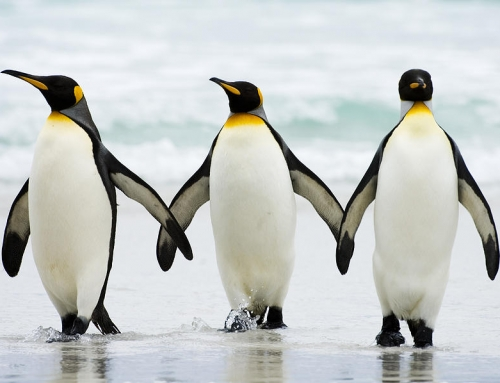 Link Building Techniques That Work In The Penguin Era